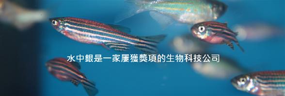 Vitargent (International) Biotechnology Limited's banner